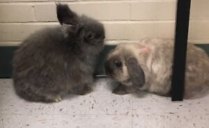 2 Bunnies with every you need