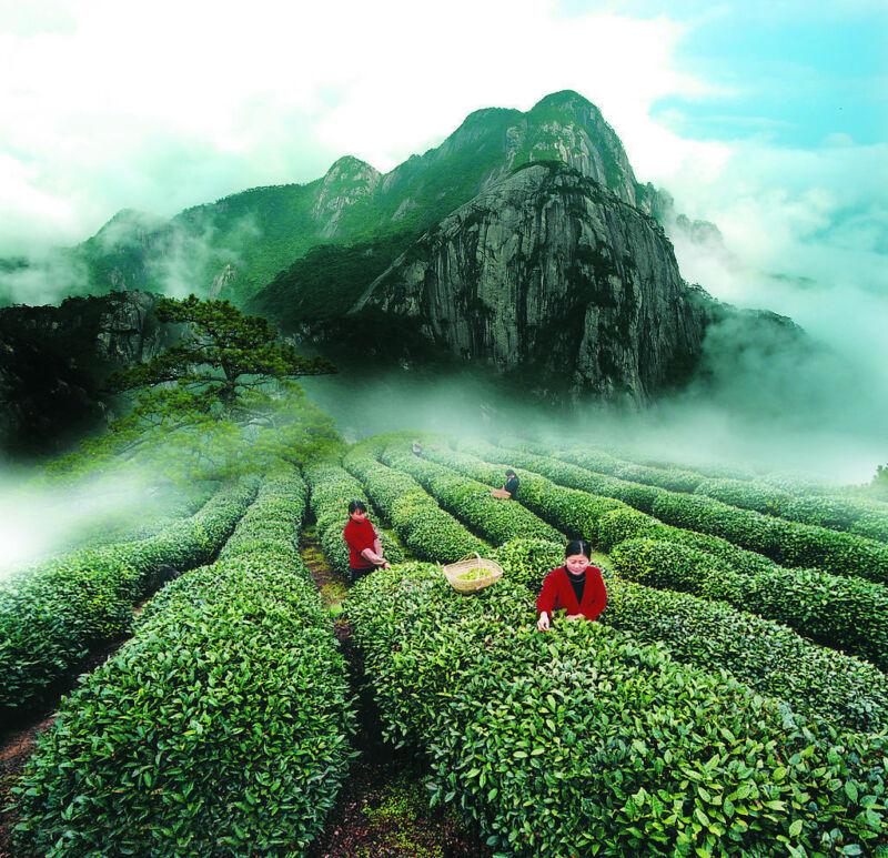 11 Years Great Ripe Pu-Erh Tea 357g Older Puer Tea Puerh tea Pu er Tea Black Tea