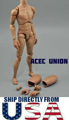 1 6 Narrow Shoulder Male Figure Body Ttm18 Ttm19 W  Neck Hot Toys  U S A  Seller