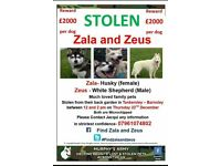 HELP LOST DOGS
