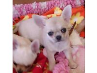 Boy and girl avaliable to reserve kc reg
