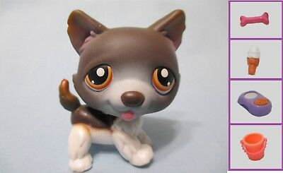 - Littlest Pet Shop Dog Husky 174 and Free Accessory Authentic Lps