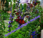 butterflyshandbagsbeautyandmore