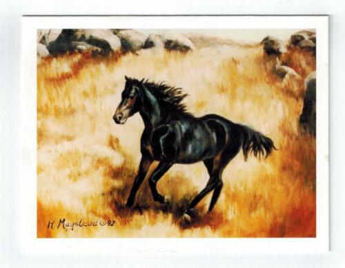 New Black Horse In Field Notecard Set - 6 Note Cards By Ruth Maystead HOS-3
