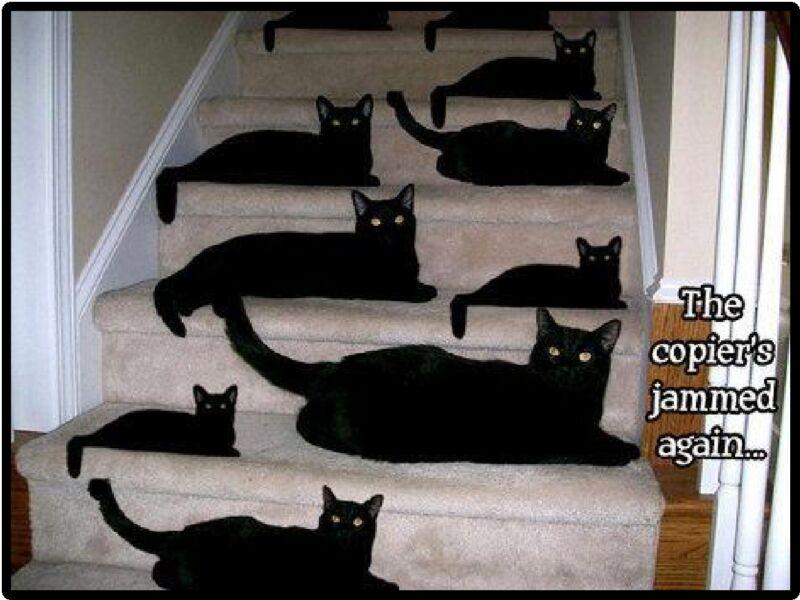 Funny Cat Humor The Copier