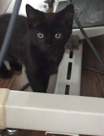 Male Kitten ready to go