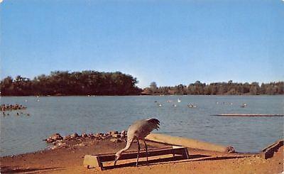 Delton Michigan~Kelloggs Bird Sanctuary~Wintergreen Lake~Crane in Sand~1950s PC