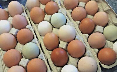 7 Fresh Fertile Chicken Hatching Eggs - Assorted Barnyard Mix Rare Breeds