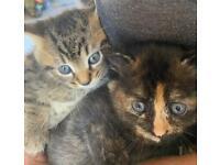 Kittens's