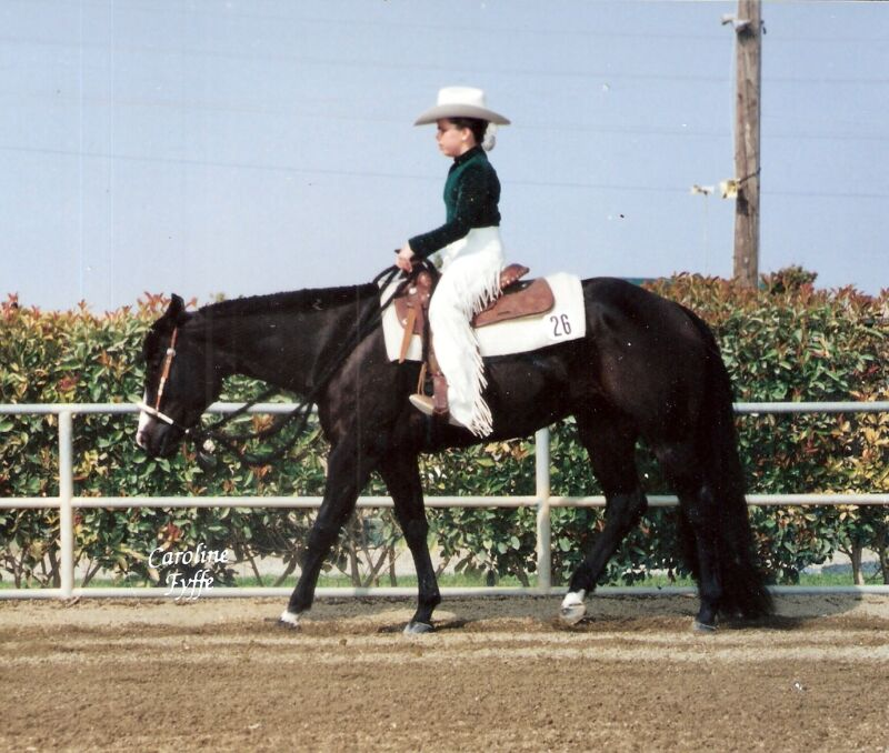 Horse Tail Extension 1lb Black NEW by KATHYS TAILS Free bag USDF AQHA, APHA, FEI