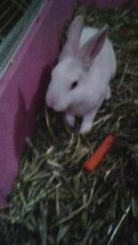 white female rabbit with indoor cage & food