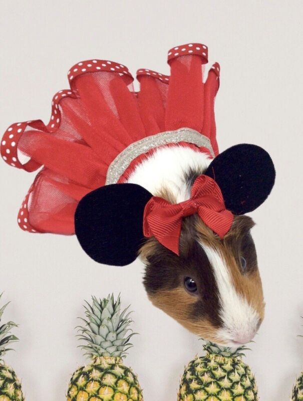 New Minnie Mouse Costume For Guinea Pig Or Small Animal Pet Halloween costume