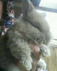 Rabbits for sale