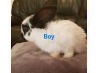 4 girls 3 boy bunnies