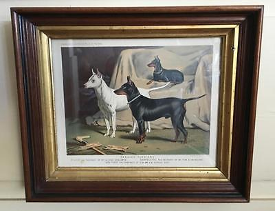 English Terriers Chromolithograph Manchester Terrier Mini Pin London 1881 Framed ()