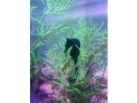 Seahorses for sale
