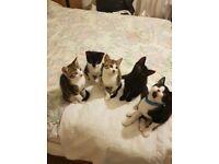 Baby kittens - 10 weeks old