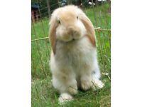 Bunny Boarding & Pet Sitting