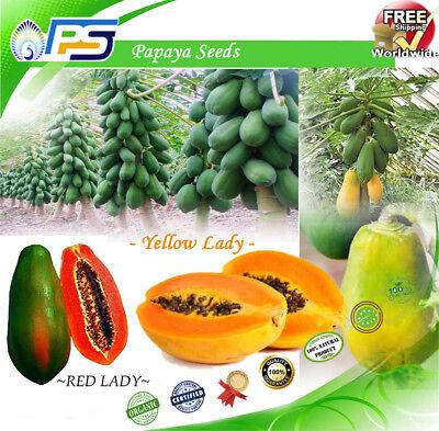 Rare! Dwarf Waimanalo Papaya! tropical fruit tree seeds plant Red & Yellow 50+  - Papaya Tree Planting