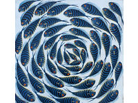 Tinga Tinga Oil Painting on Canvas of FISH