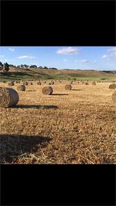 Oaten hay new season round bales Willowmavin Mitchell Area Preview