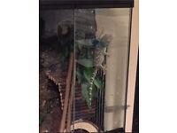 Tokay Gecko & Setup