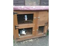 Male rabbit and hutch, food and straw