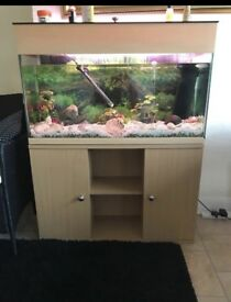 200lt fish tank with cabinet for sale including fish and accessories