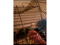 Budgie cage,only used for a weel before upgrading to a larger one for 2 birds,so as new