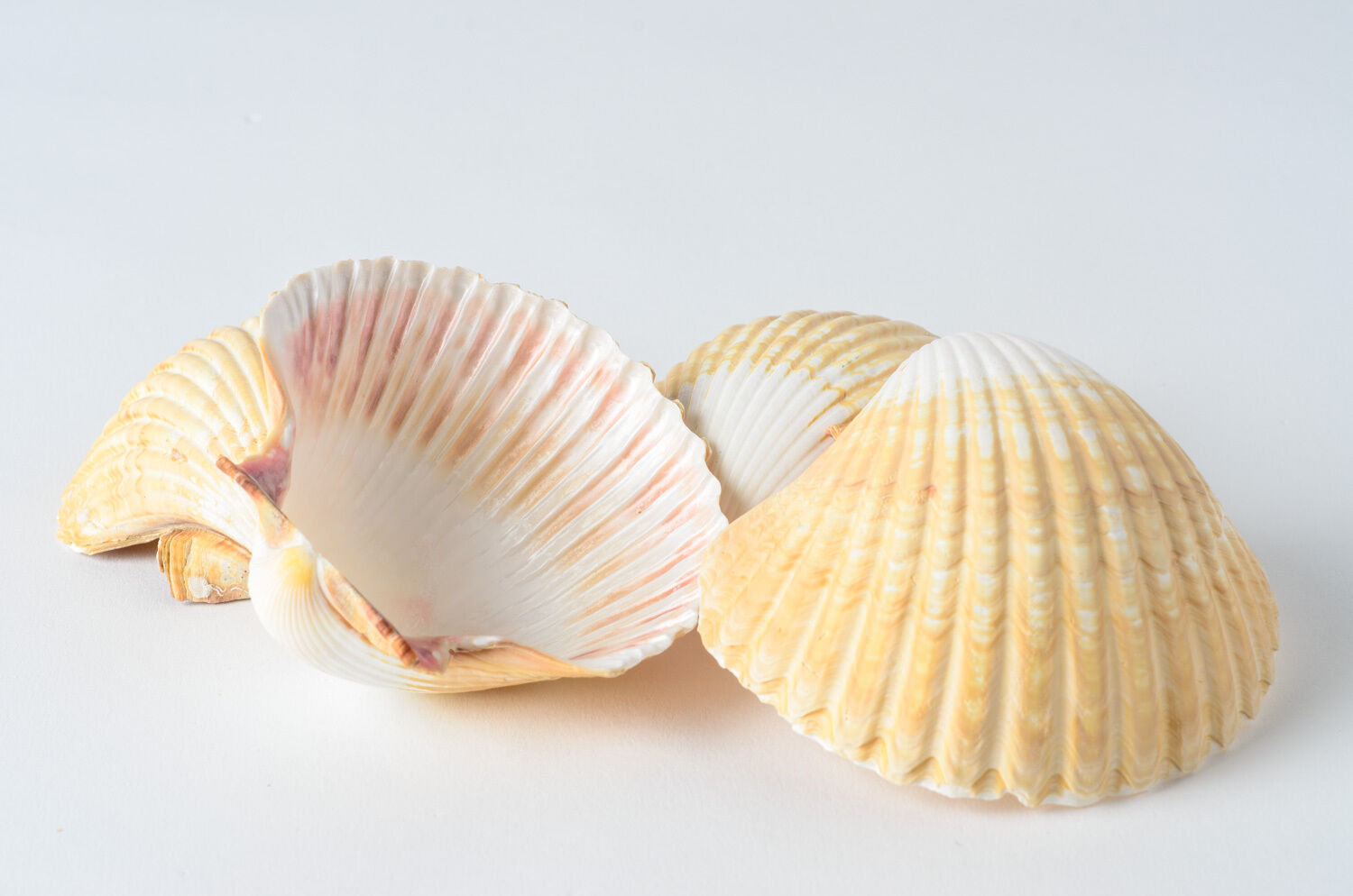 sea shell powder sea shell powder suppliers and