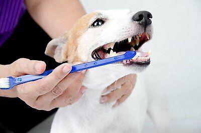 Pet Products Dog Toothbrush Set Double Sided Canine Dental Hygiene Soft Brushes