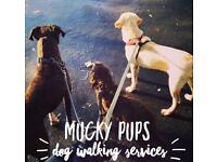 Mucky Pups Dog Walking Services