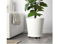 Kia muskot 32cm plant pot