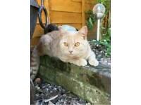 Missing cat name alfie