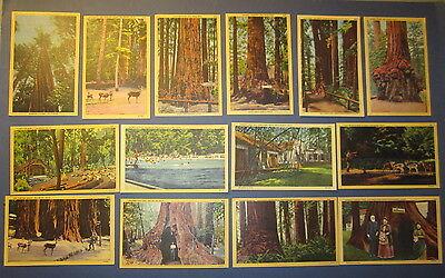 Lot of 14 Old Vintage 1940's - BIG TREES - California Redwoods  Linen POSTCARDS