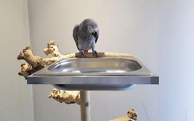 Papageien BADEWANNE für Papageienfreisitz o. Voliere Badewanne Vögel ABNEHMBAR