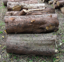 Conifer PINE Timber Wood for Fuel or Carving, Firewood logs, Stove, Woodburner - Landscaping Garden