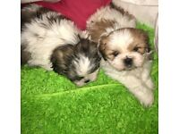 CUTE PUPPYS FOR SALE