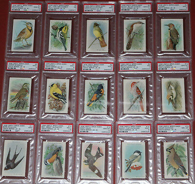 1938 Church Dwight Useful Birds Of America Series 10 Set All Psa Graded W 9S 10