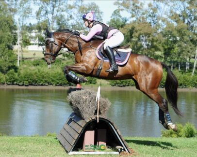 NEED HORSES WORKED? PROFESSIONAL RIDER COME TO YOU