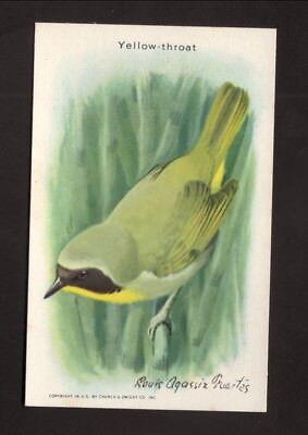 Yellow Throat  1936 Church   Dwight Useful Birds Of America Card