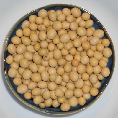 Soybean Sprouts - Soybeans for Soy Milk Tofu Sprouts - Non-GMO Soybean Certified Seed (1LB - 10LB)