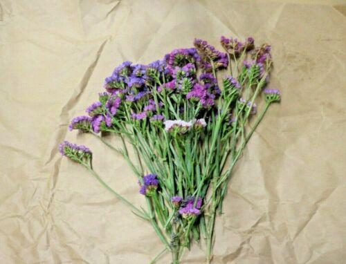 Purple Statice - Large Bunch 30 stems