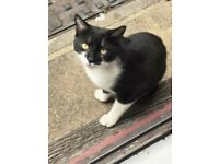 Cat needing a new home - Mr Jhengis