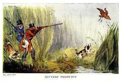 SHOOTING BITTERN WATERFOWL IN MARSHES SPRINGER SPANIELS DOGS, BIRD HUNTING PRINT