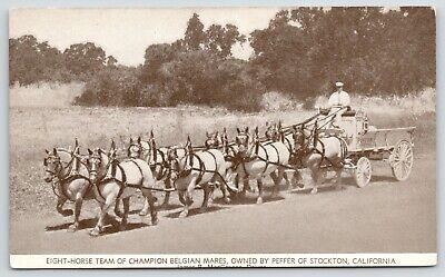 Stockton CA~Peffer Eight-Horse Team of Champion Belgian Mares~Radio KGDM~1920s segunda mano  Embacar hacia Argentina