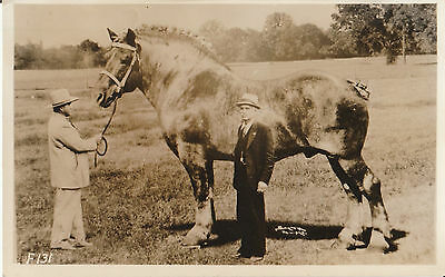 BROOKLYN SUPREME - BELGIAN DRAFT HORSE POSTCARD - WORLDS LARGEST EARLY RPPC 2