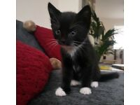 *All reserved!!* Gorgeous female kittens