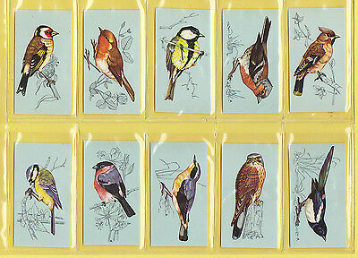 BIRDS -  TETLEY  TEA  -  VERY  RARE  SET  OF  48  BRITISH  BIRDS  CARDS  -  1970