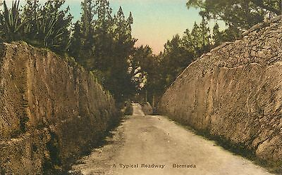 Vintage 1930s Hand Colored Postcard A typical Roadway Bermuda